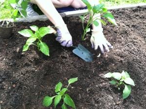 Gardening 01