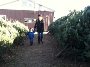 Picking out a tree