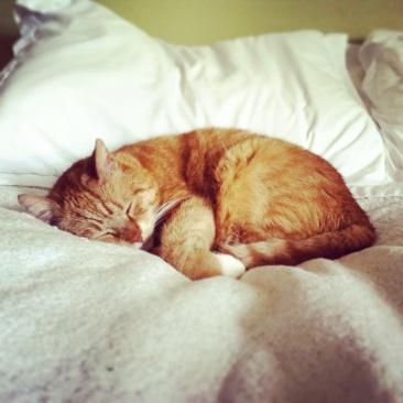 Beardslee sleeping