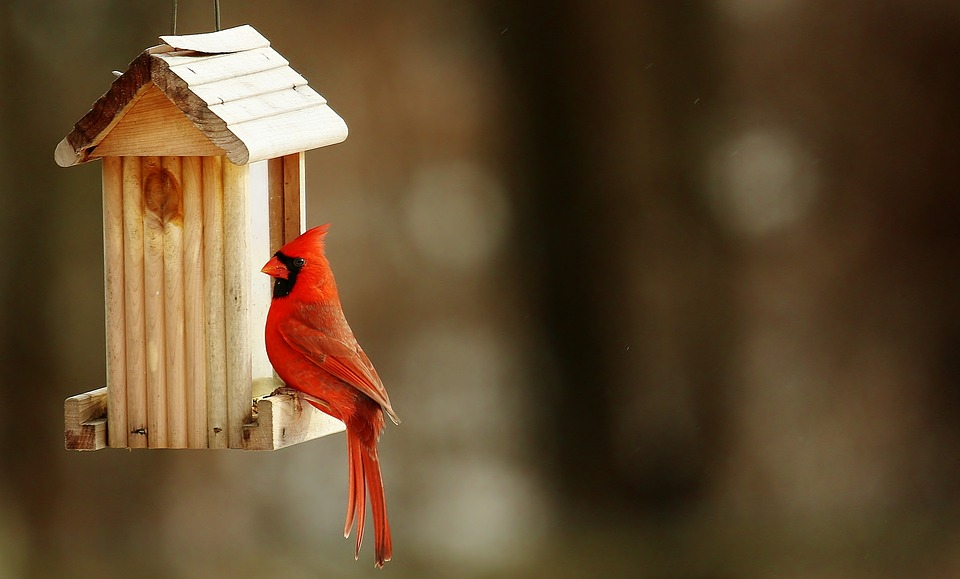 cardinal-birdhouse-nature