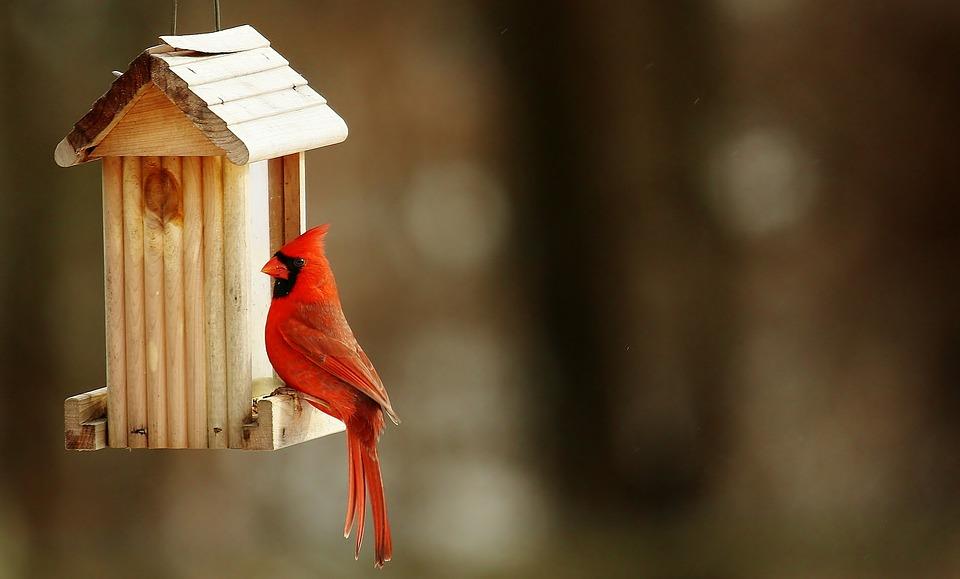 cardinal-birdhouse-nature