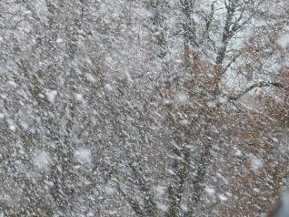 blizzard-snow-winter